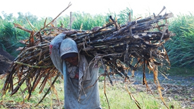 Sugar Cane Industry Development Act (R.A. 10659) Signed